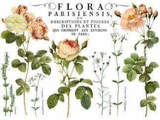 "IOD Transfers ""Flora Parisiensis"""
